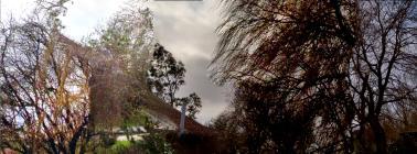 gardentrees