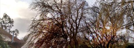 gardentrees1