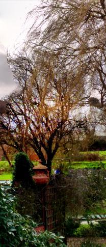 gardentrees2