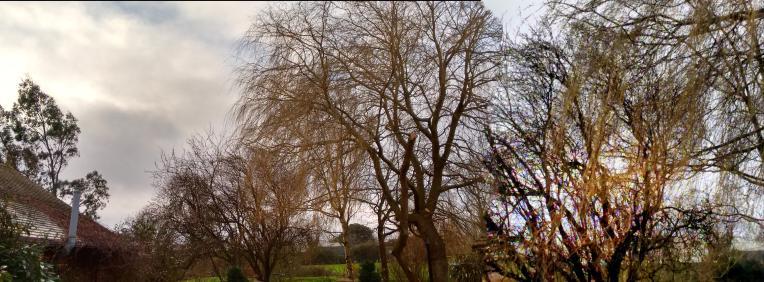 gardentrees3