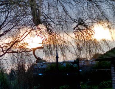 ice garden sunset 2