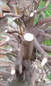 tree roots2