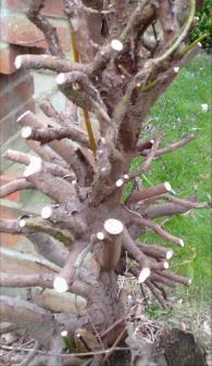tree roots4