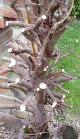 tree roots4