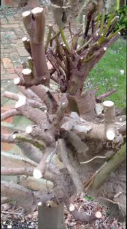 tree roots5