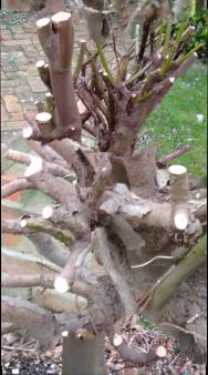 tree roots5
