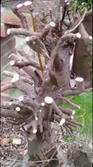 tree roots6