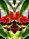red flower 3