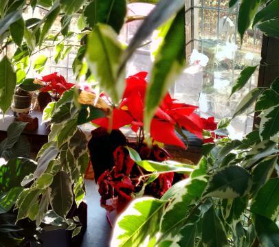 red flower stitch