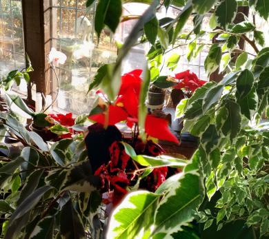 red flower stitch2