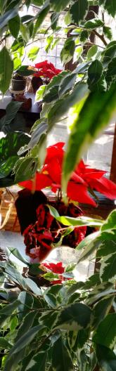 red flowers 1