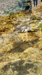 shoreline view 4