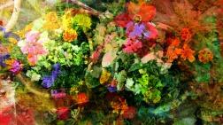 june blooms 1
