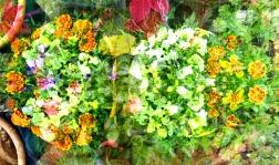 june blossoms 3