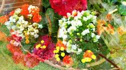 june blossoms 4