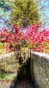 secret spring garden