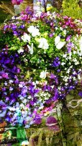 july flowers 1