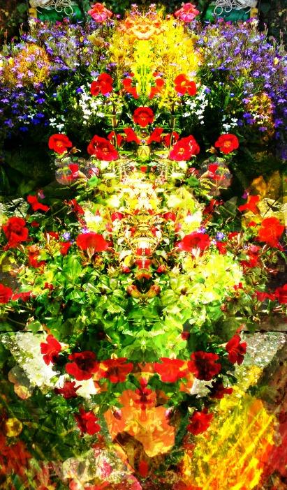 july flowers 2