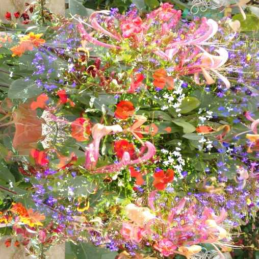 july flowers 3