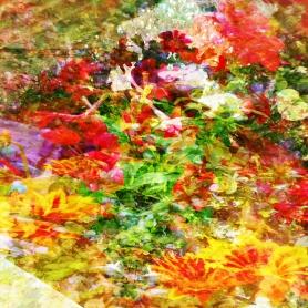 july flowers 4