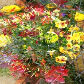 july flowers 5