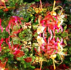 july flowers 6