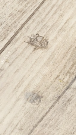 traces 5
