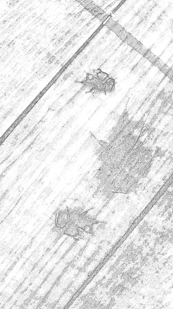 traces 6