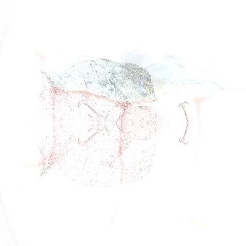 transience1